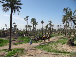 Camel Trek Marrakech Palm Grove