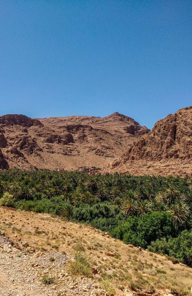 palm oasis boumalne dades