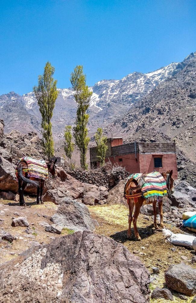 imlil trek atlas mountains